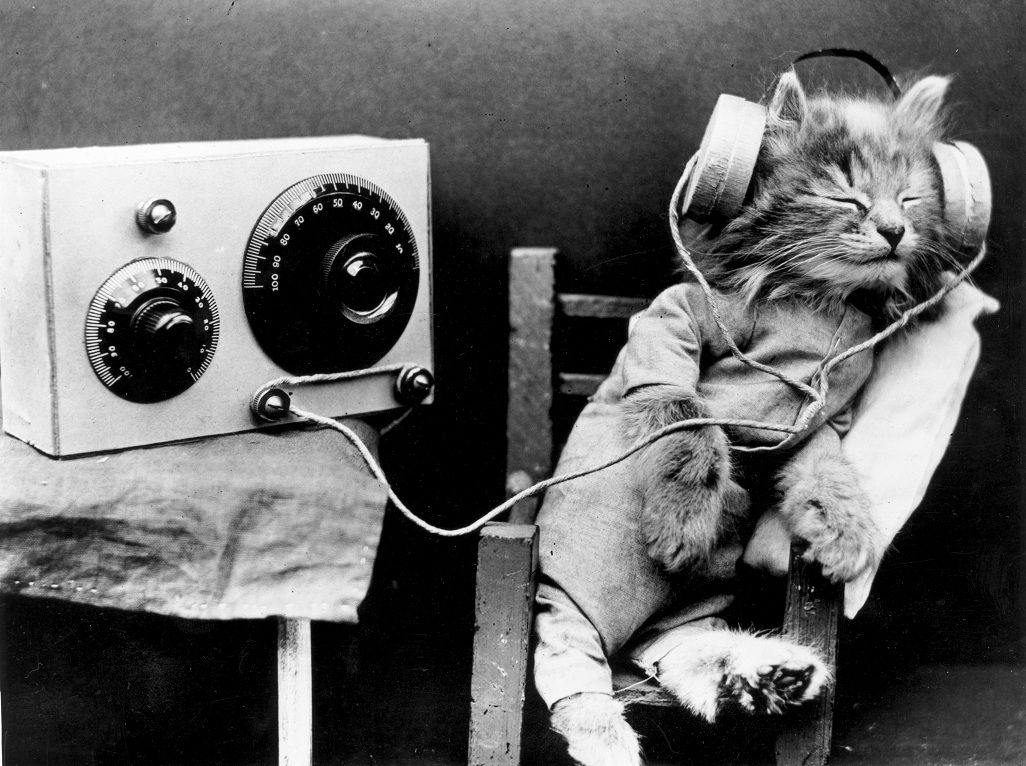 Music for cats: These songs are scientifically proven to be your cat's jam