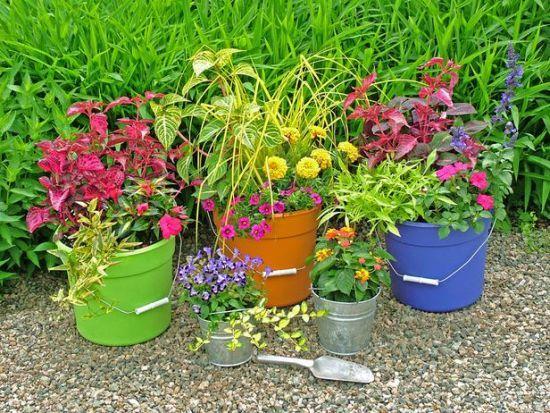 DIY Container Gardening Ideas | Colourful DIY bucket container ...