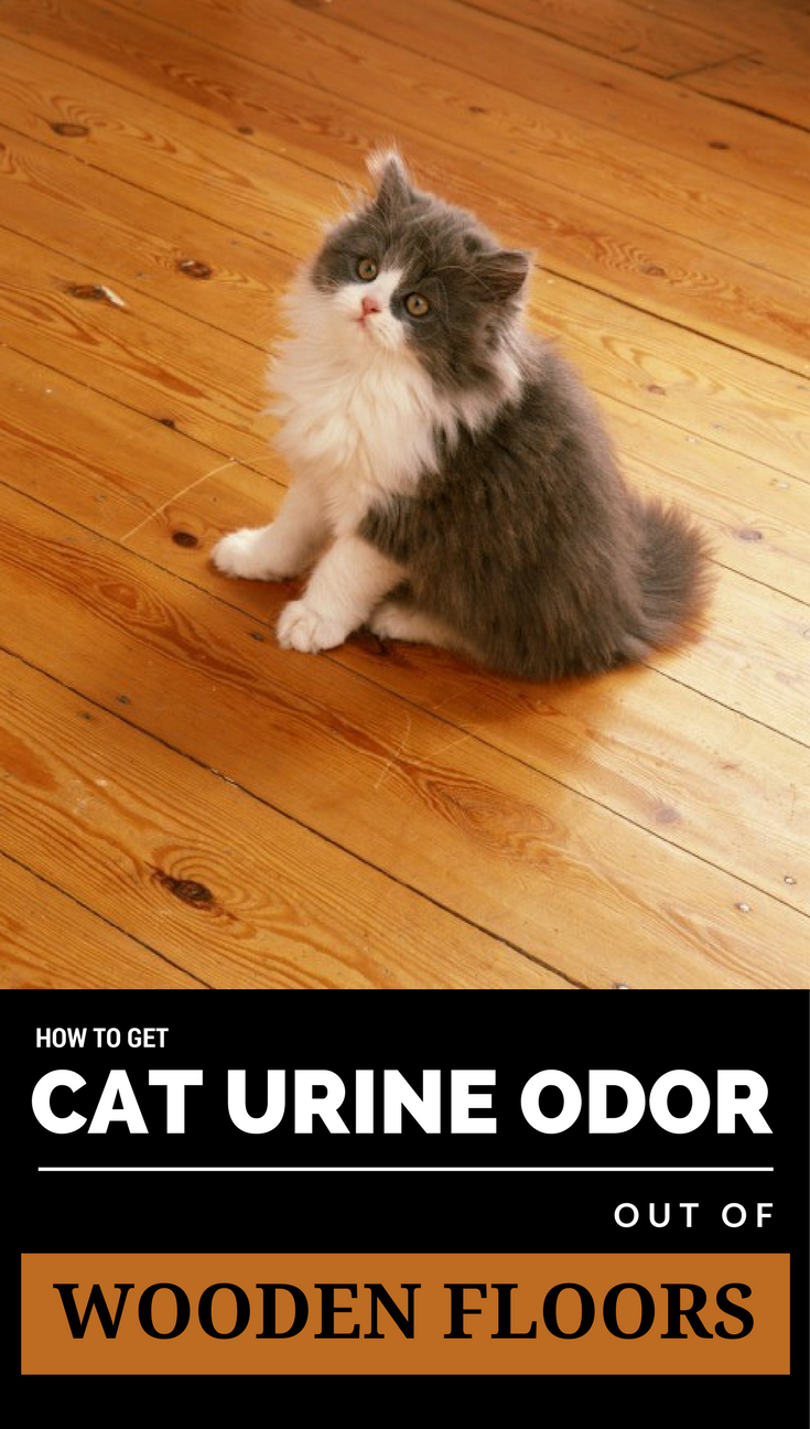 How To Get Cat Urine Odor Out Of Wooden Floors Ncleaningtips Com Cat Urine Urinal Wooden Flooring