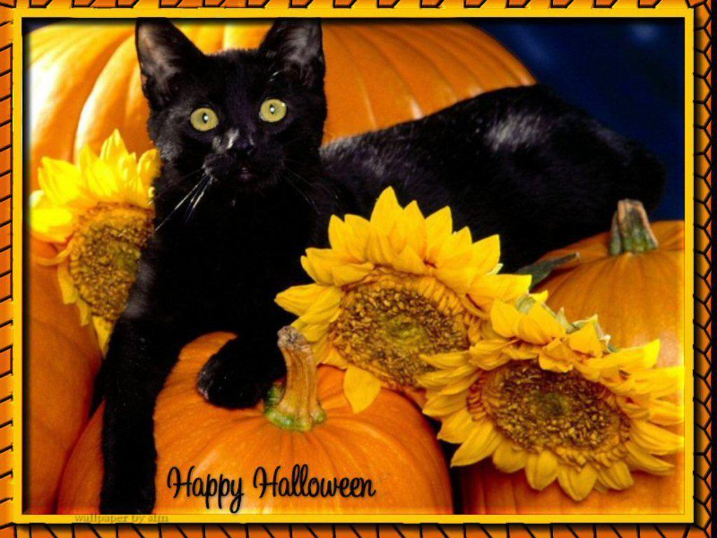 Halloween Screensavers Free Free Beautiful Halloween Cat Wallpaper Download Free Screensavers Black Cat Halloween Cat Wallpaper Halloween Cat