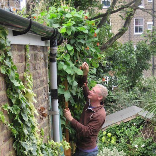 De 10 beste groenten om in potten te kweken for Groenten tuin