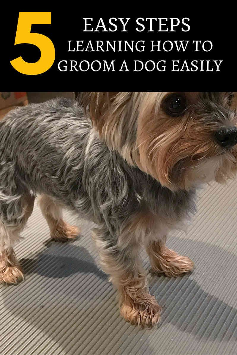 How To Choose Dog Grooming Classes Ilovemydog Pet Dog Pinterest