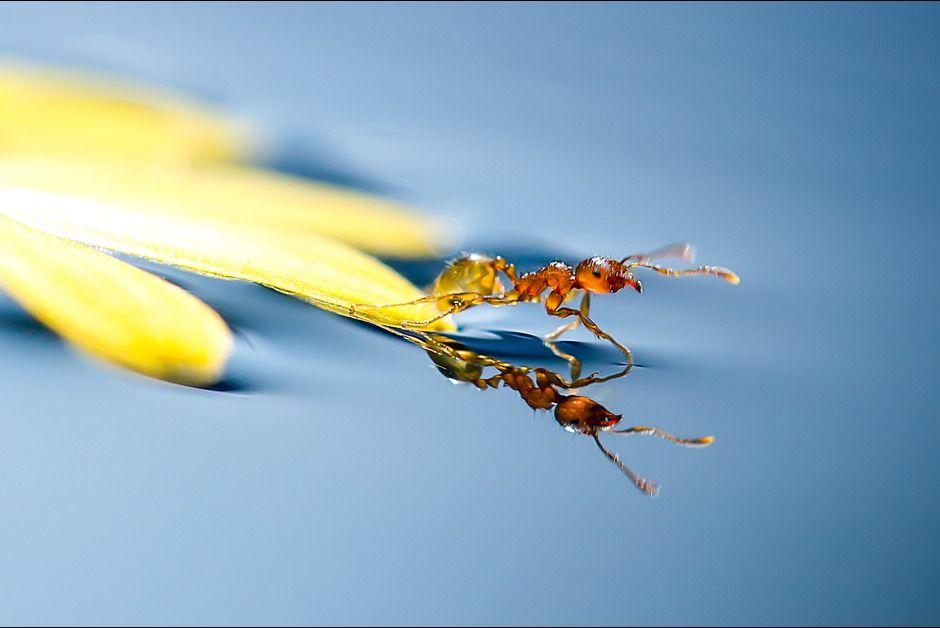 La goutte d'eau et la fourmi - Paris Match