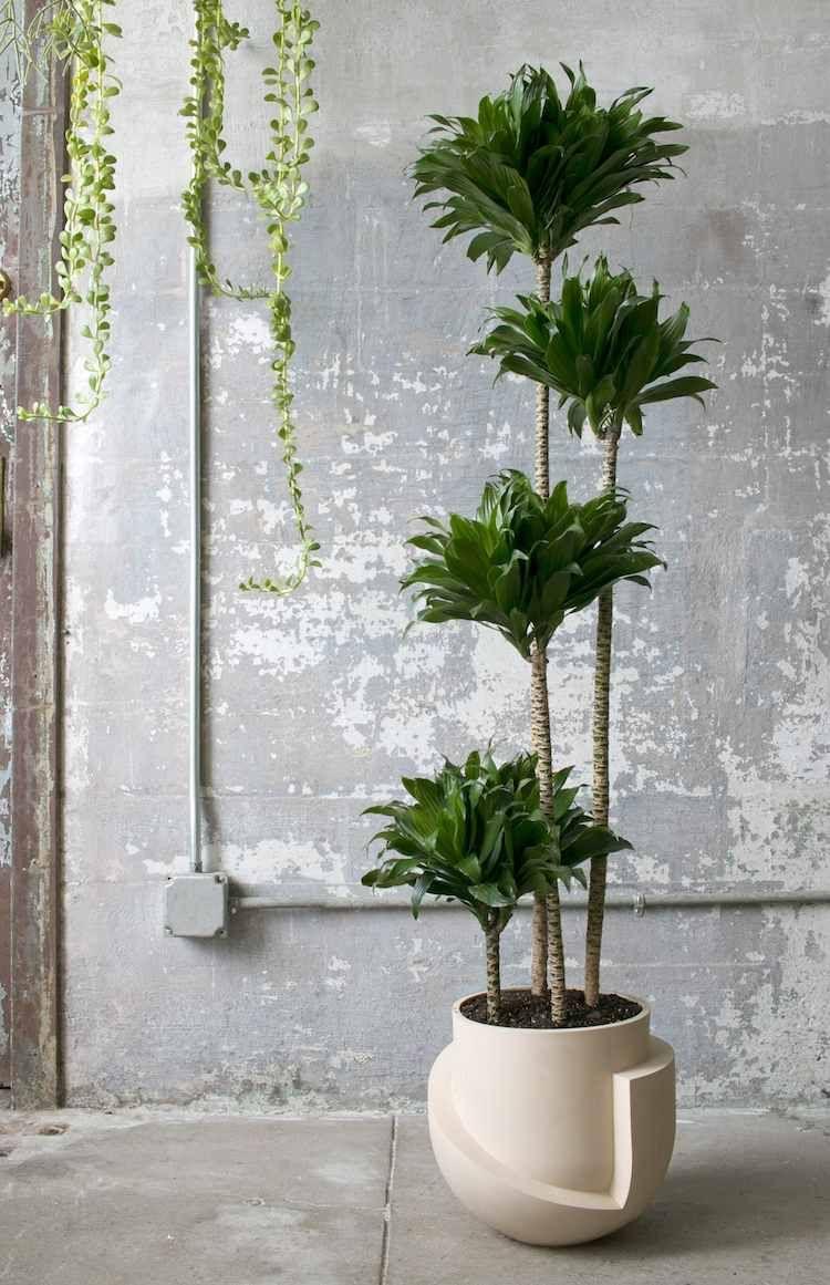 100 Fantastique Suggestions Grosse Plante Exterieur En Pot