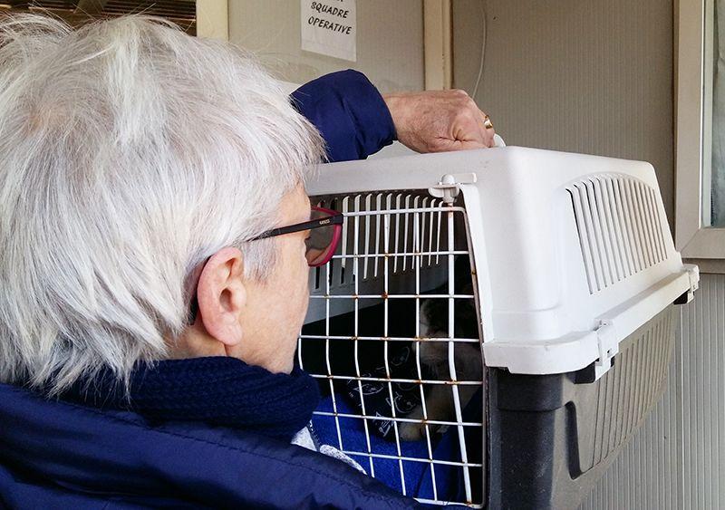 Nina, recuperata a Amatrice dai Vigili del Fuoco a sei mesi dalla prima scossa - http://bit.ly/2m3gNmz - Pet Community and Social Network