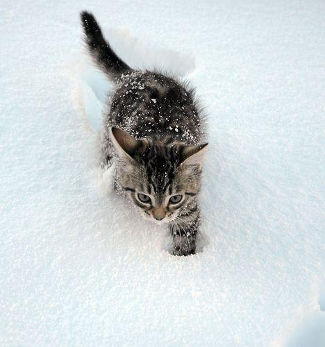 Виктор — «Первый снег.» на Яндекс.Фотках