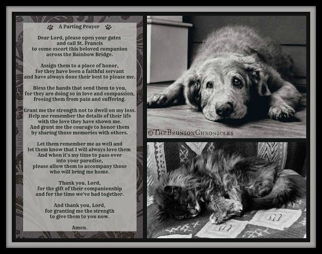 Heaven Dog And Sayings Quotes