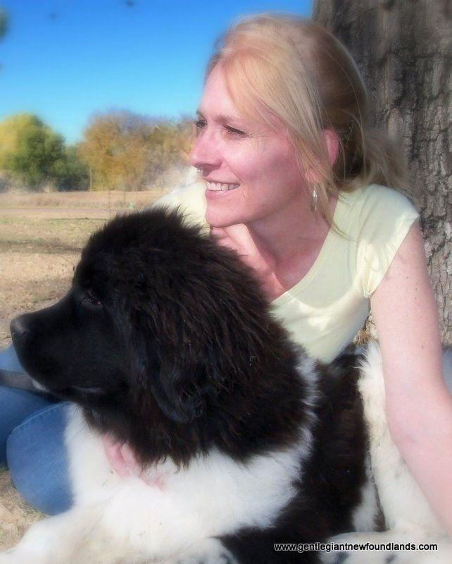 6 Month Old Landseer White Black Newfoundland Puppy Www