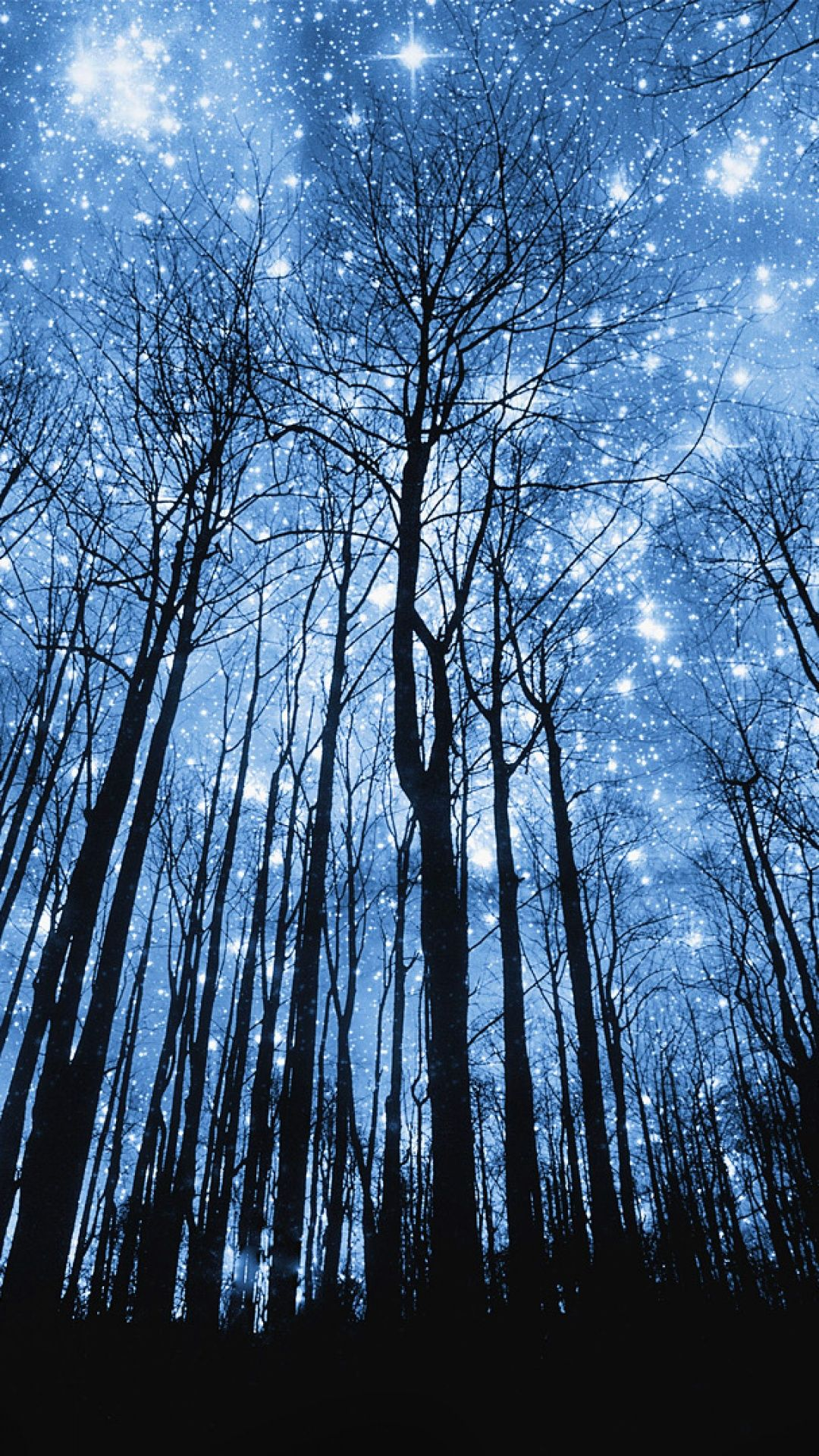 Forest in the Starry Night Night sky wallpaper, Starry