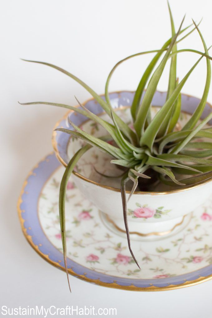 Have you Heard of Air Plants? -   13 plants Decor cups ideas