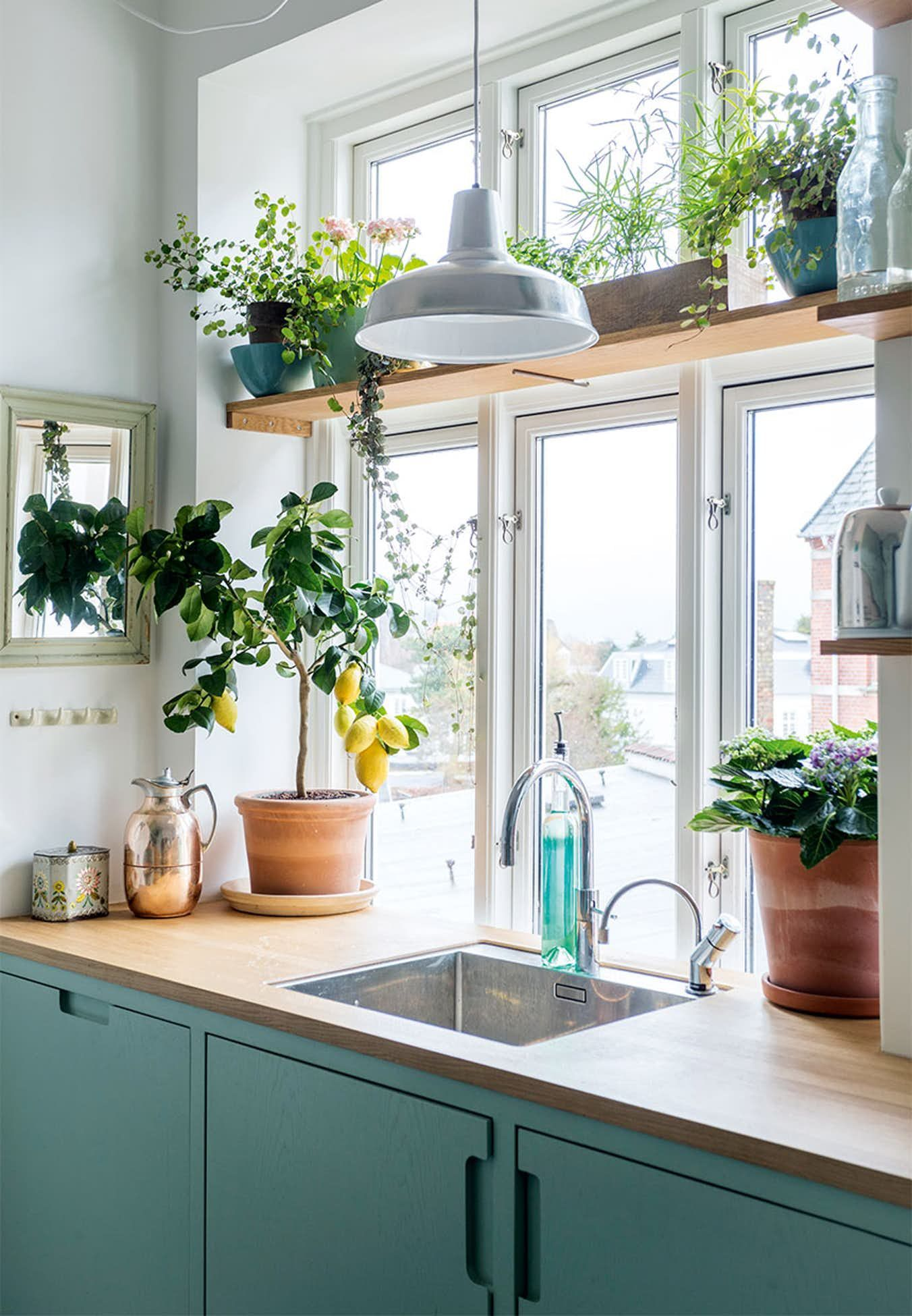 Love the colors of the cabinets and the tall windoes with the clerestory top, the wood counters and all the plants. I want this!