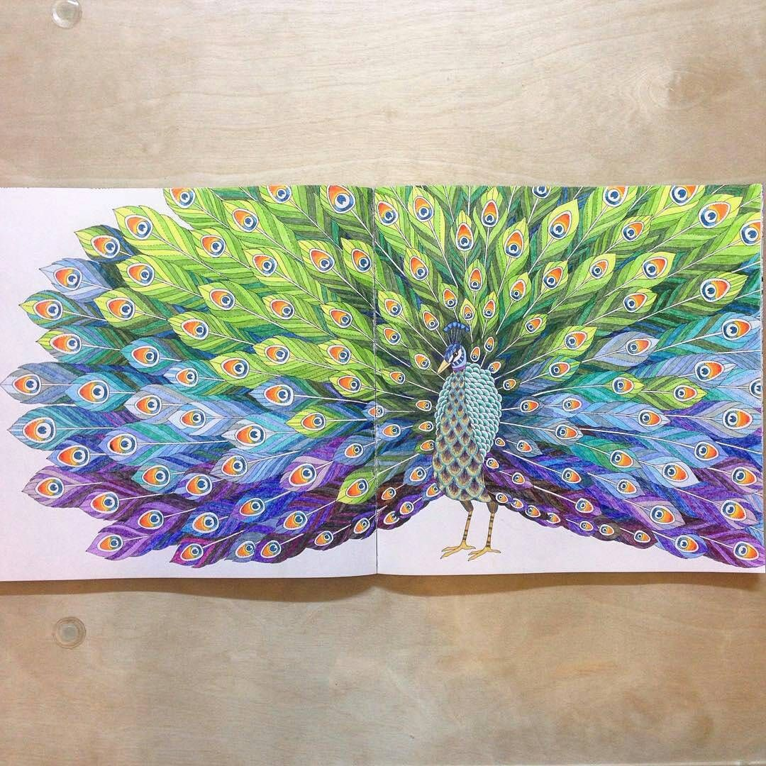 Coloring ideas peacock