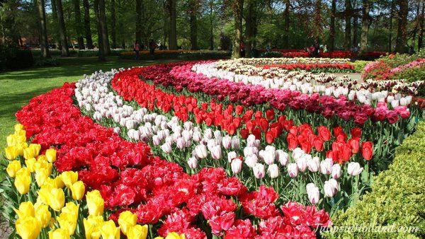 Very nice RT @tulips_holland  Rainbow of tulips :-D #HappySpring #tulips #flowers https://t.co/par87zIrNY
