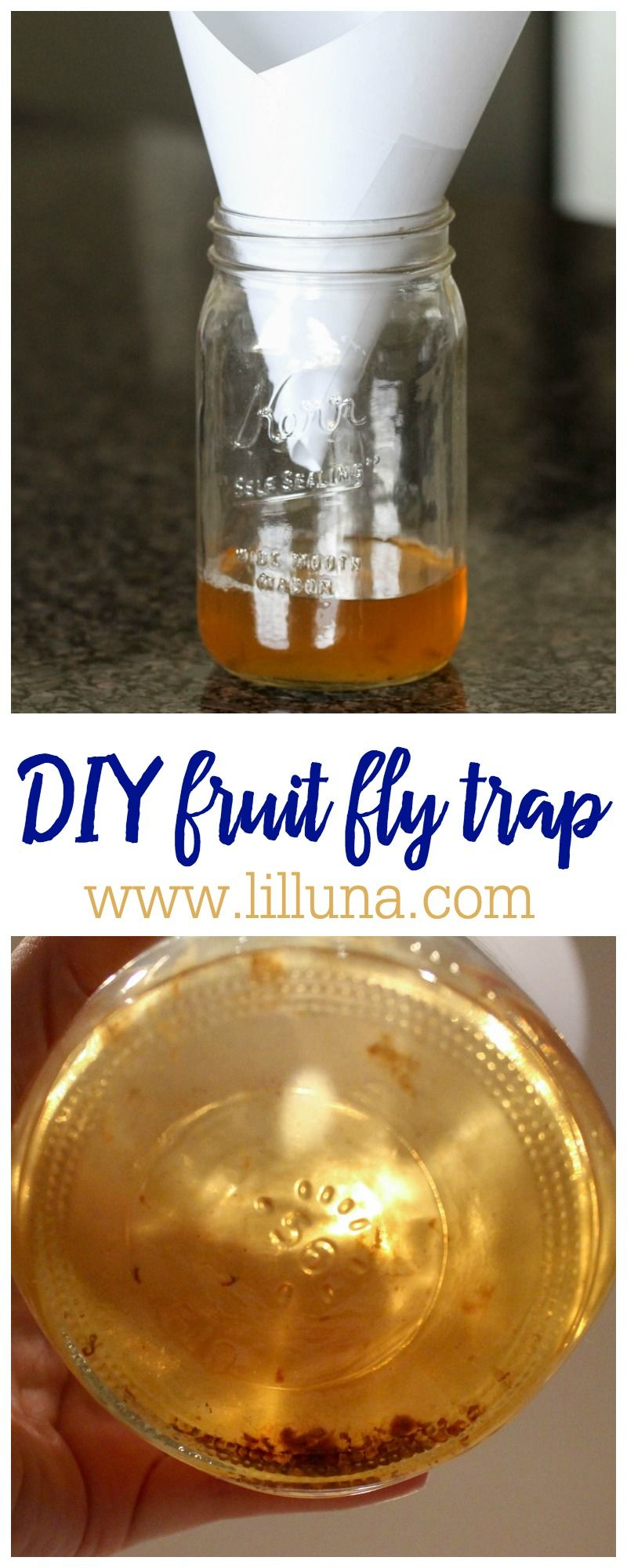 Homemade Fruit Fly Trap How to Get Rid of Fruit Flies