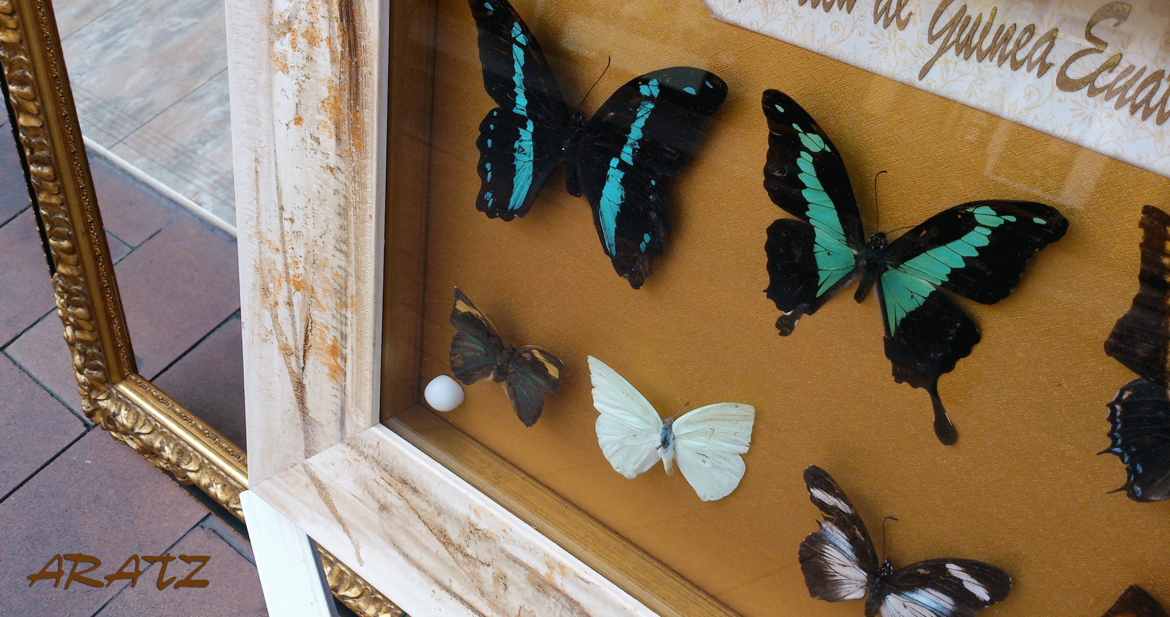 Colección de mariposas enmarcadas | Nuestros trabajos especiales ...