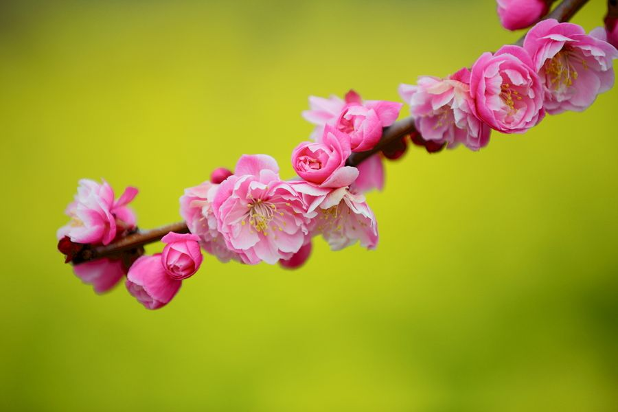 Coming of spring by Hiroshi Oka, via 500px
