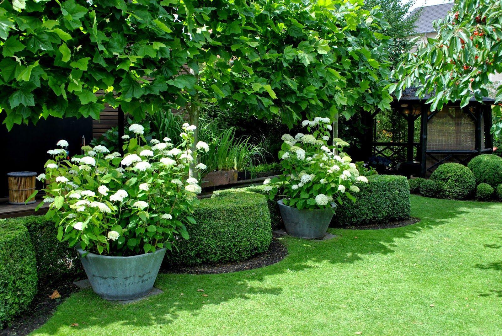 Hecken und Buchs im Garten Garten Pinterest
