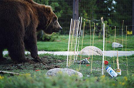 Interesting Technology Electric Bear Fence Runs On 2 D Batteries