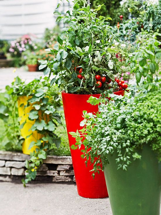 15 Fun Ideas For Growing Tomatoes Growing Vegetables Container Gardening Vegetables Diy Herb Garden