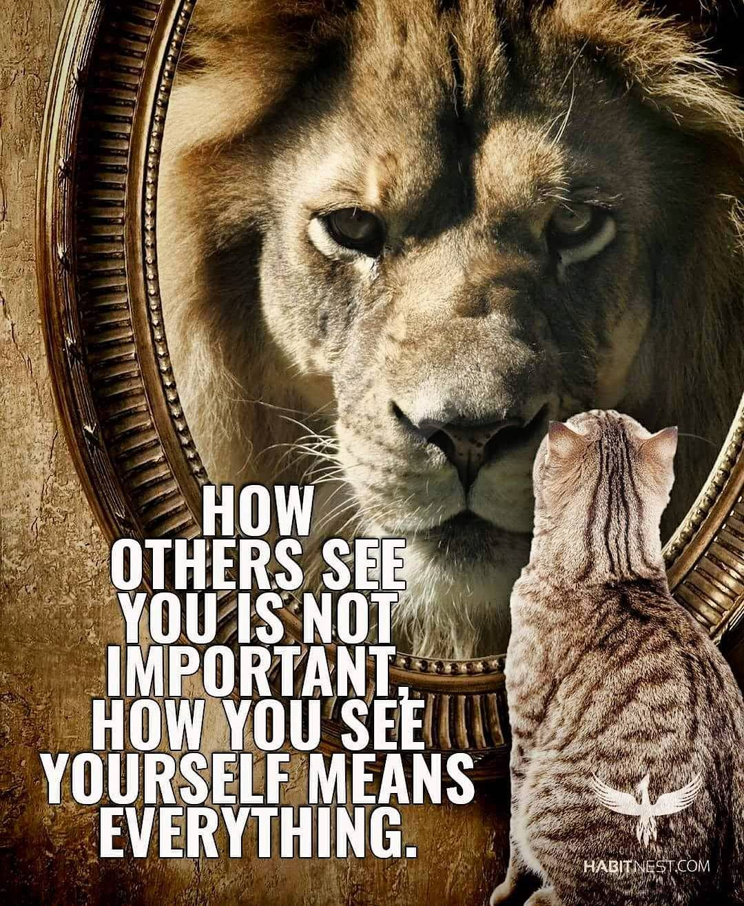 Motivational Quotes With Lion Images: Chad Mccrary / Wheelchair BB