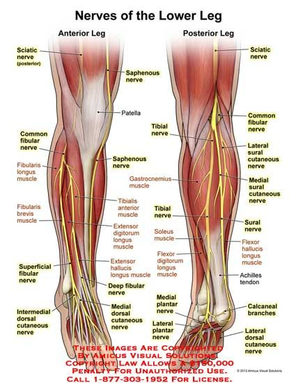 Nerves of anterior/posterior leg | PA Anatomy | Pinterest | Anatomy ...