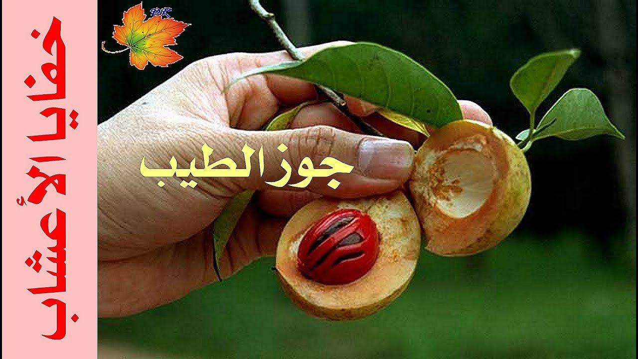 حقق القوة الجتسية مع جوز الطيب Arabic Quotes
