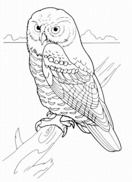 owl coloring pages colorful backgrounds flower images hd