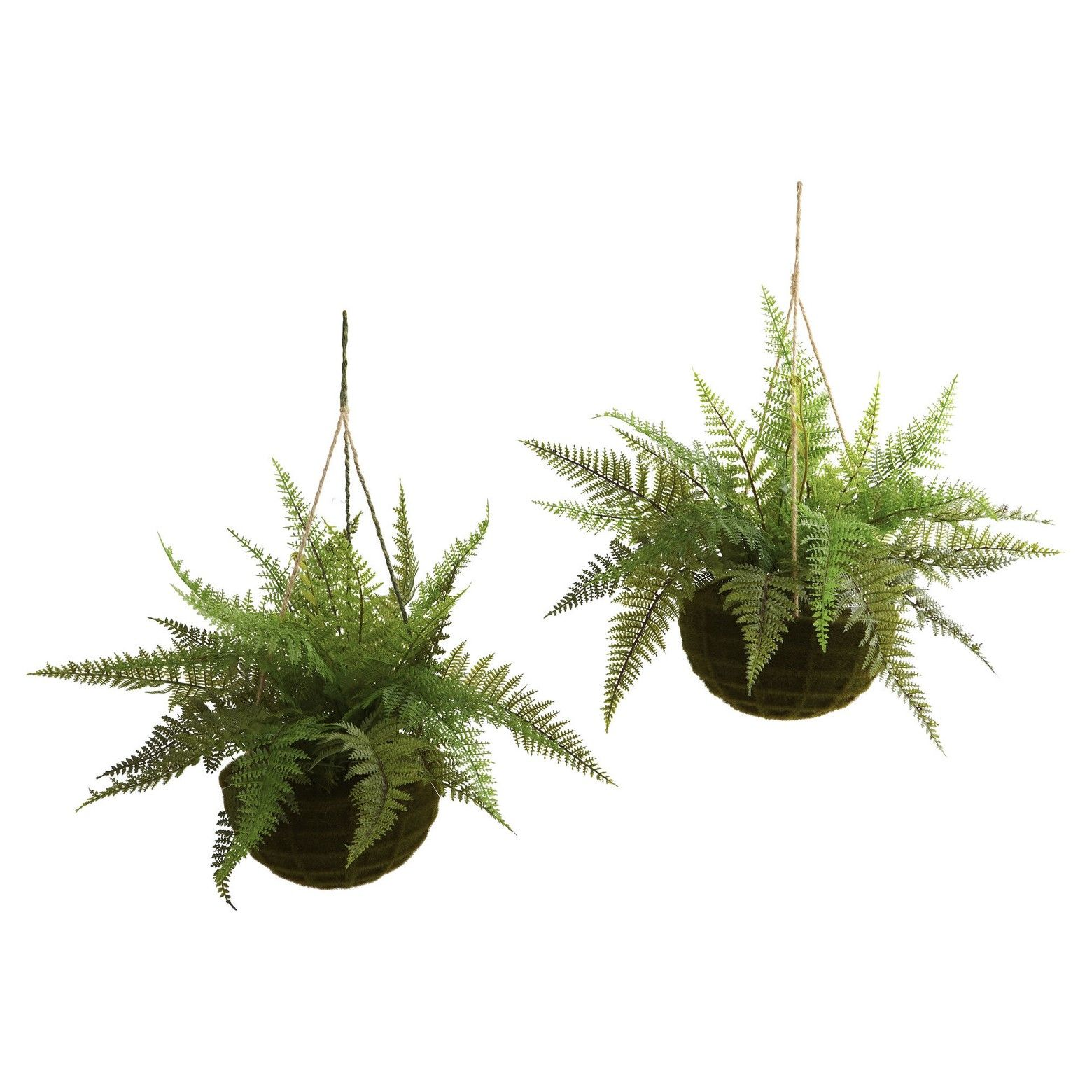 Leather Fern With Mossy Hanging Basket Indoor Outdoor Set Of