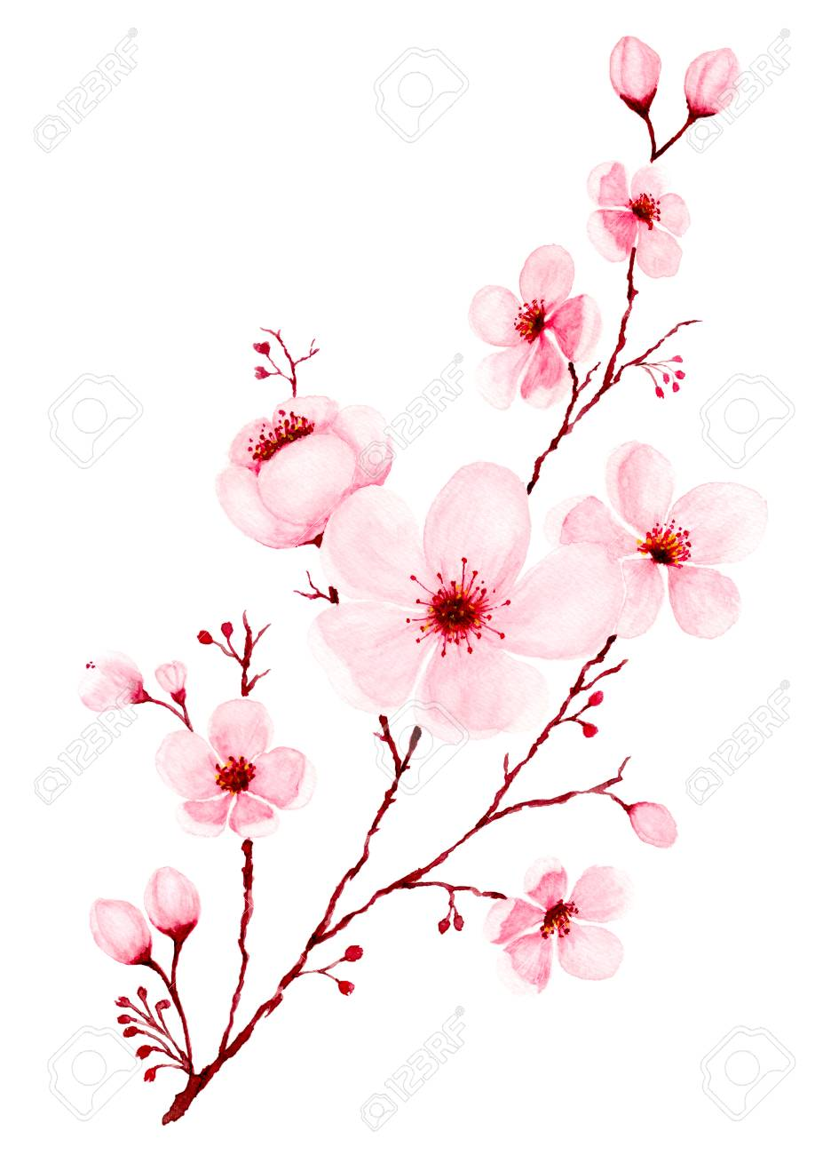 Watercolor Cherry Blossom Branches Hand Painted Spring Or Summer Cherry Blossom Drawing Cherry Blossom Art Cherry Blossom Painting