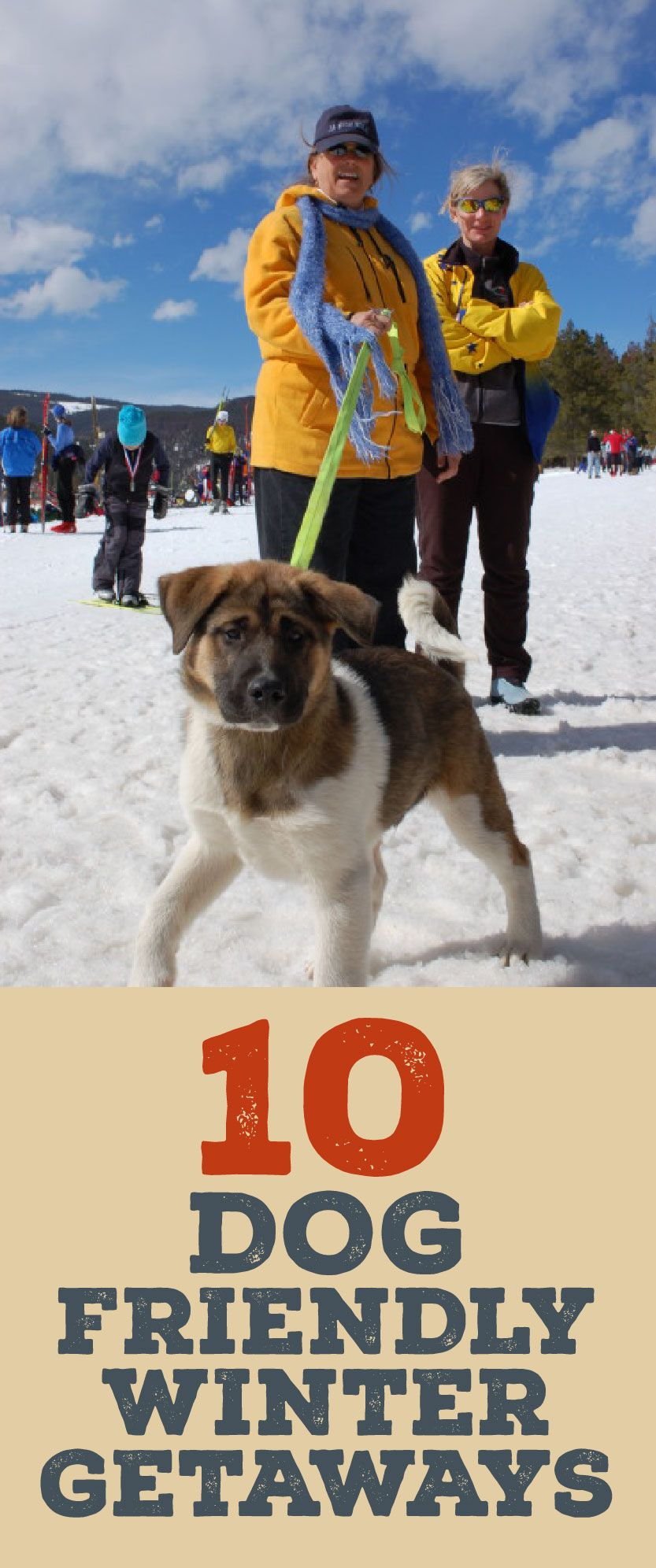 10 dog friendly winter getaways | pets are people too | pinterest
