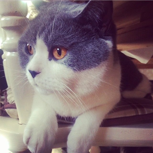 Vincent George Instagram 101 Best Cat