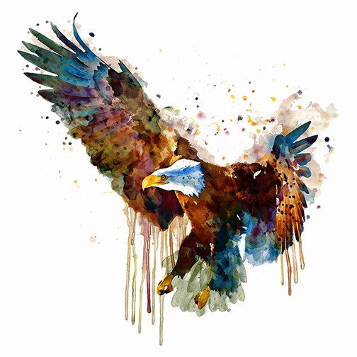 Bald Eagle Watercolor Painting Instant Download Bird Of Prey