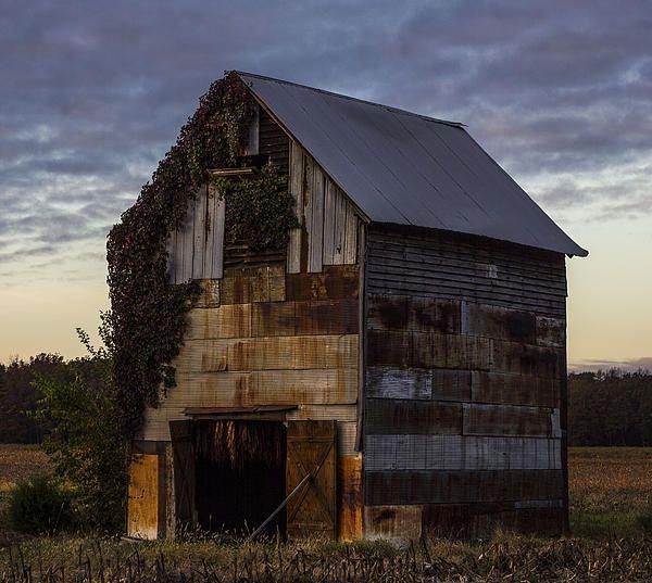 Tin-covered Tobacco Barn In Western Kentucky.