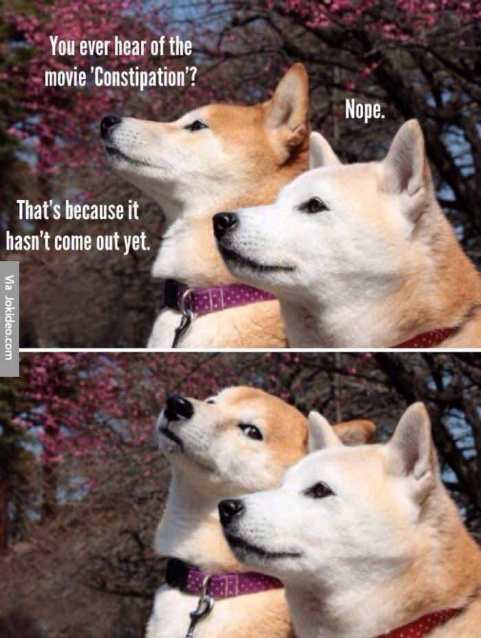 Funny Dog Telling A Joke Dog Jokes Haha Funny Funny Pictures