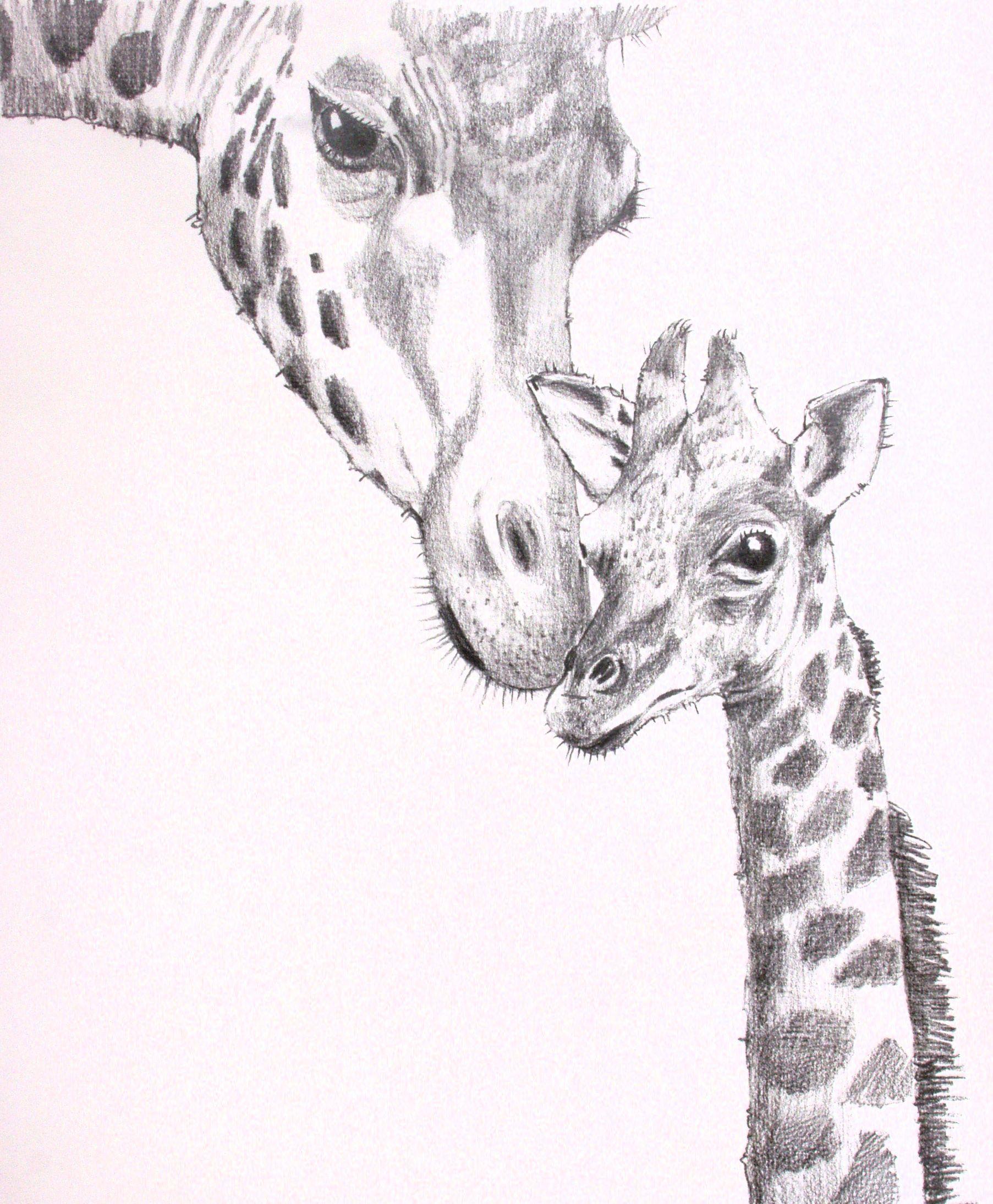 Картинки жирафы нарисованные