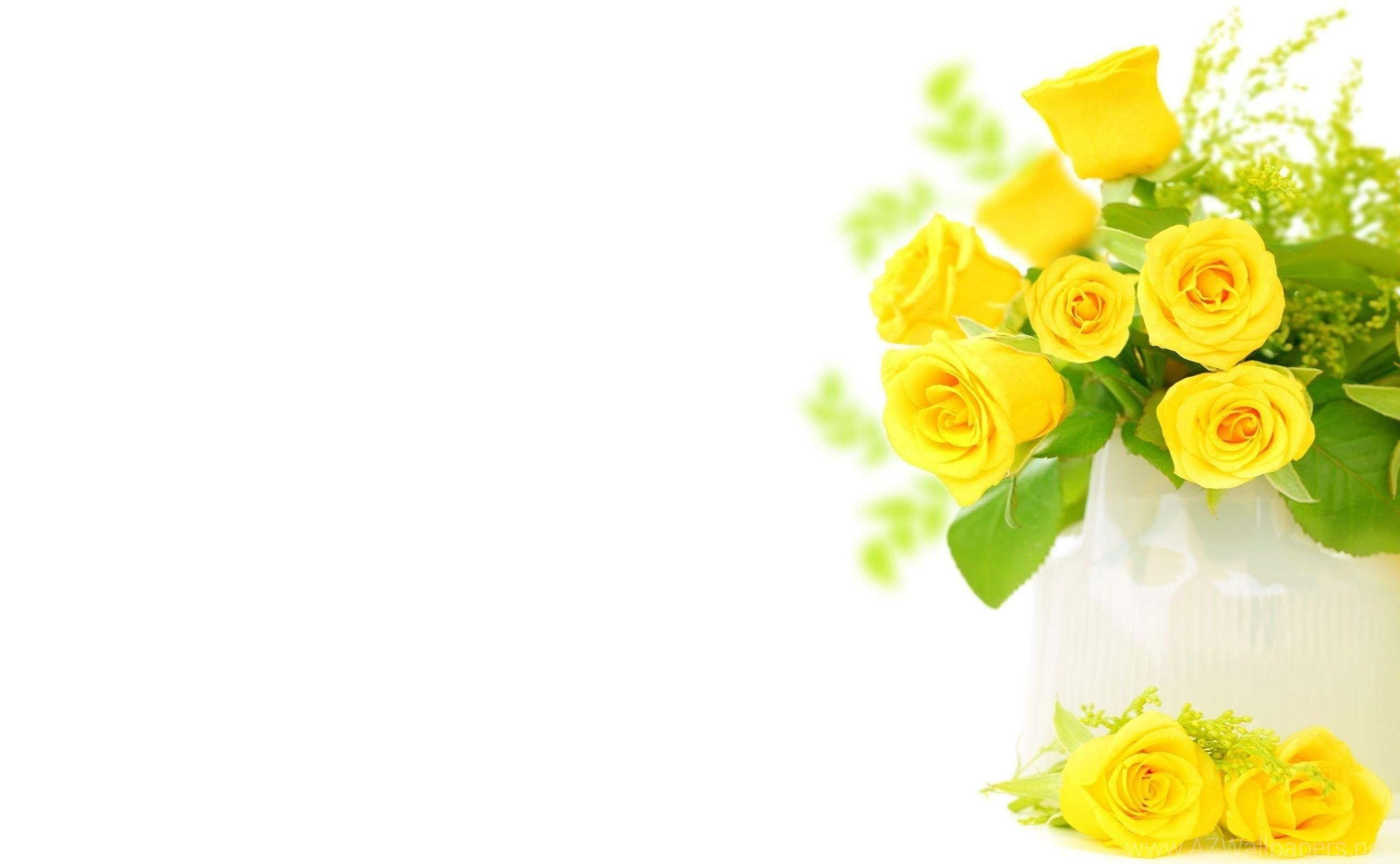 Yellow Roses Background Wallpaper | HD Wallpapers ...