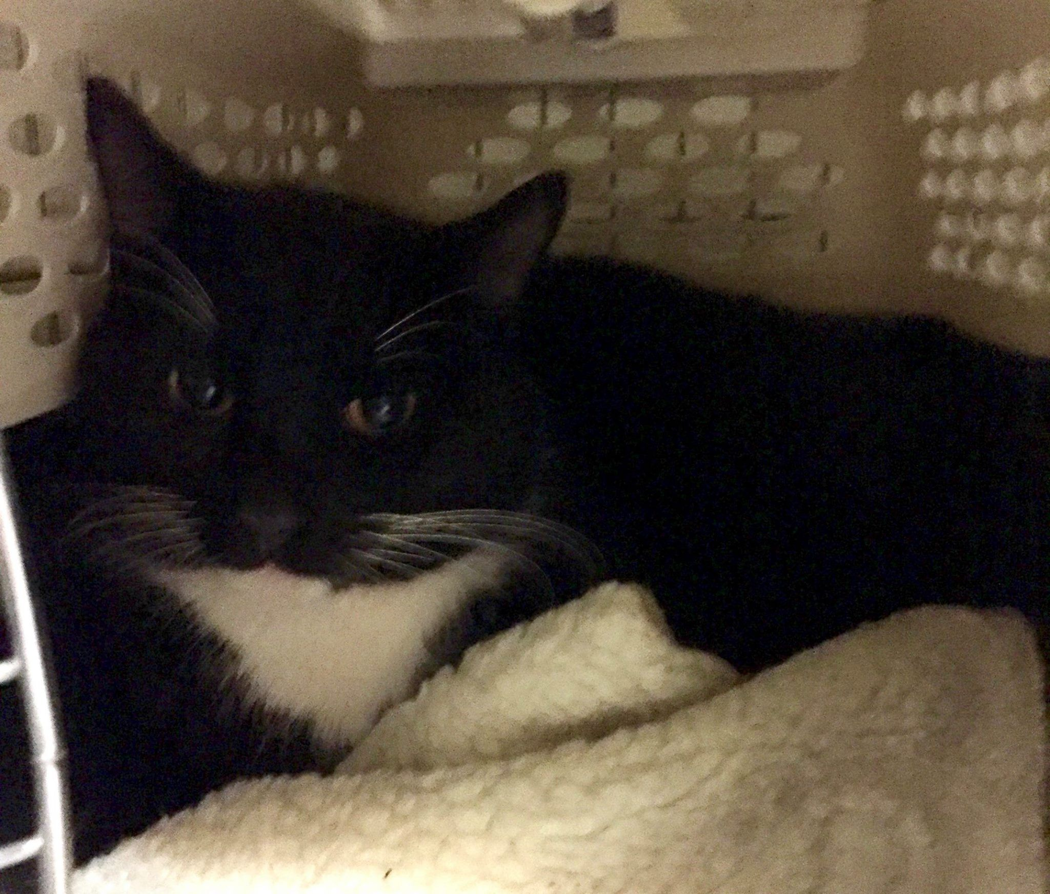Pin On Ct Pets Reunited Adopted Deceased