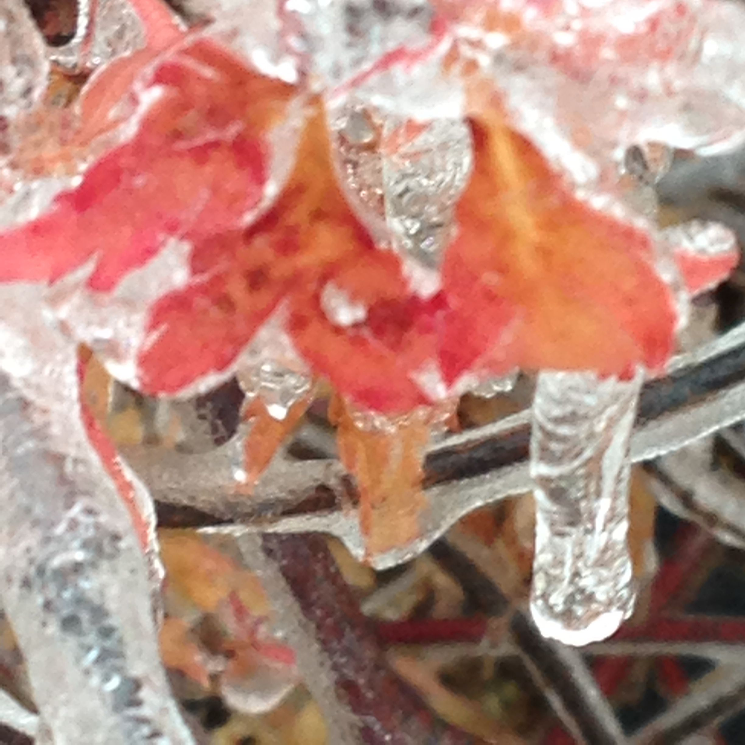 Japanese Maple in ice