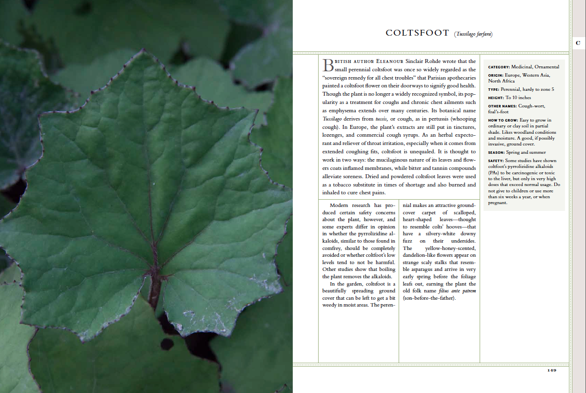 Coltsfoot Herbs Image Plant Leaves Plants