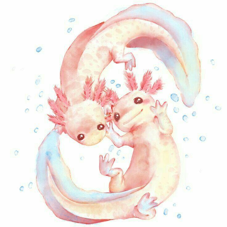 Pin de vanessa alcobe en Dibujo | Pinterest | Salamandras, Dibu y Dibujo