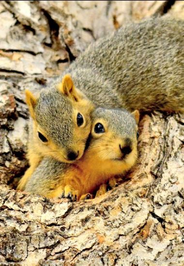 (Feelin' Squirrely group board)                                                                                                                                                      More