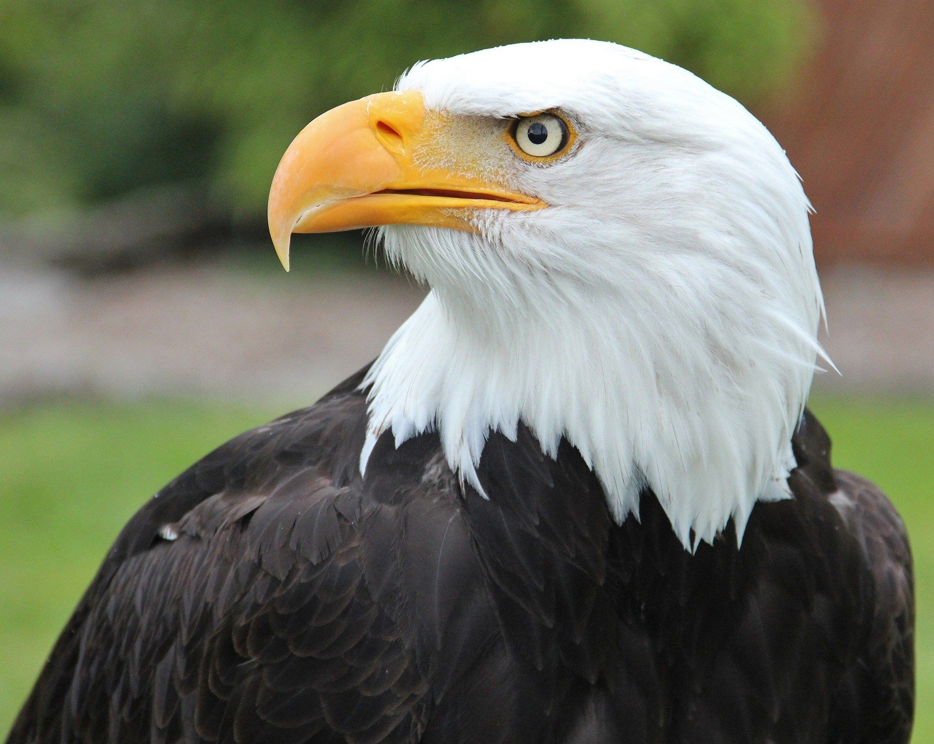 bald eagle pictures hd | sharovarka | Pinterest | Bald ...