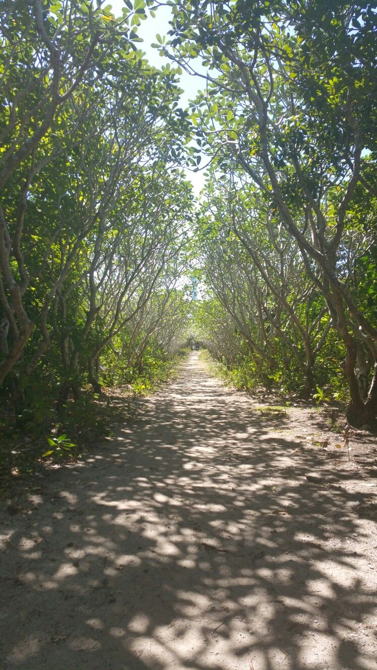 """Pathway of trees on Nogas? (Not sure on the name.) Island, Visayas Philippines. Looks like a scene out of a fantasy story. """"School For Good and Evil"""" maybe. ;) ;) Haha, but be careful. The island is surrounded by coral reefs, so beware of ouchies and sun burn."""