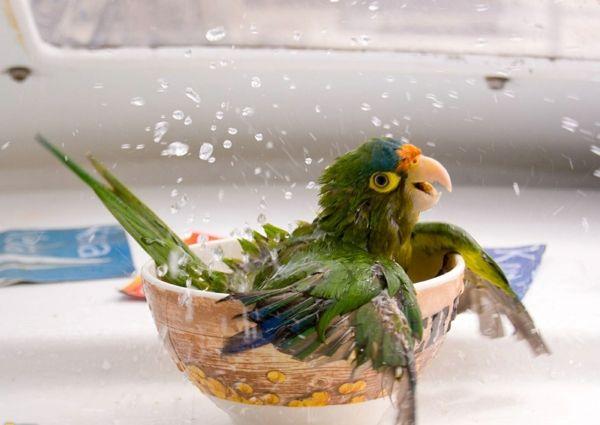 Papagei Als Haustier Ist Das Eine Gute Oder Eher Schlechte Idee