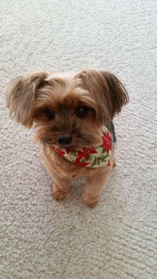 Love Zoe's bandana ) Cute animals, Christmas animals, Pets