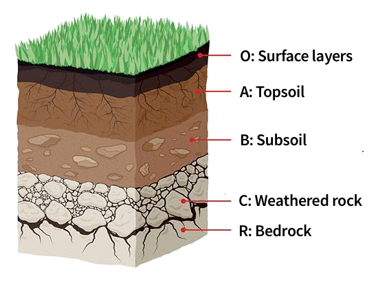 How to Plant Grass Seed  Secrets of the Perfect Lawn (2018) is part of Perfect lawn Plants - Do you always dream of having a lush and immaculate lawn  Below we'll tell how to plant grass seed so you could have the best lawn in 2018