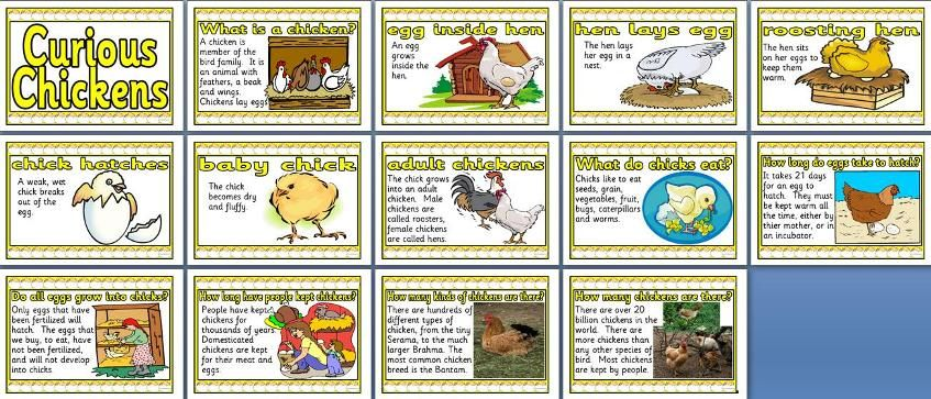photo about Life Cycle of a Chicken Printable identify Existence Cycle Of A Hen Printable Existence cycle of a chook