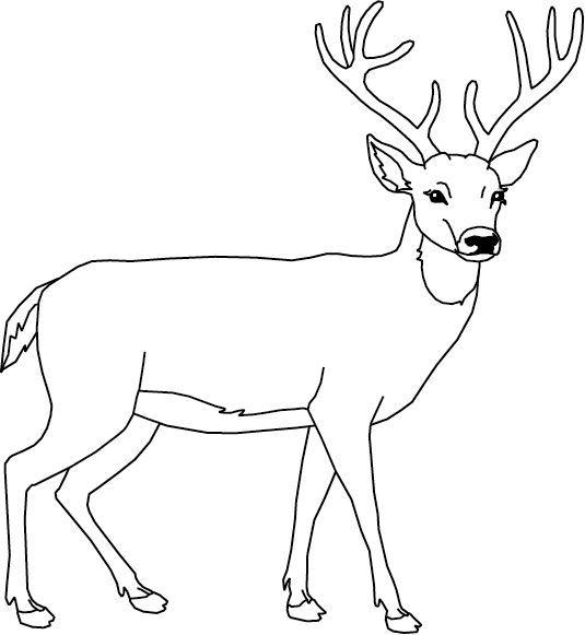 Un cerf dessin et peinture pinterest animaux et renne idees terre cuites cerf dessin - Comment dessiner un cerf ...
