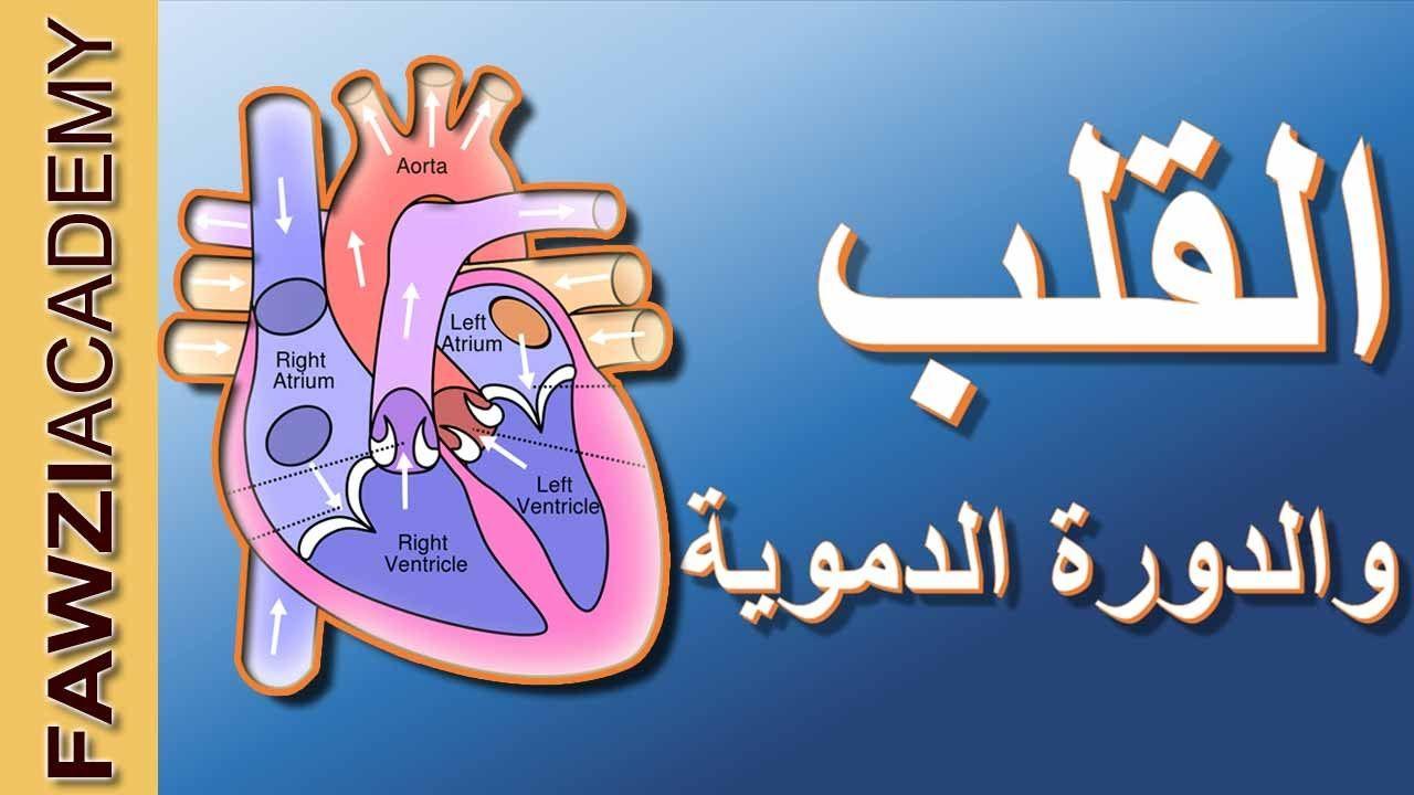 القلب والدورة الدموية الدورة الدموية الكبرى والصغرى في جسم الانسان بالف Projects To Try