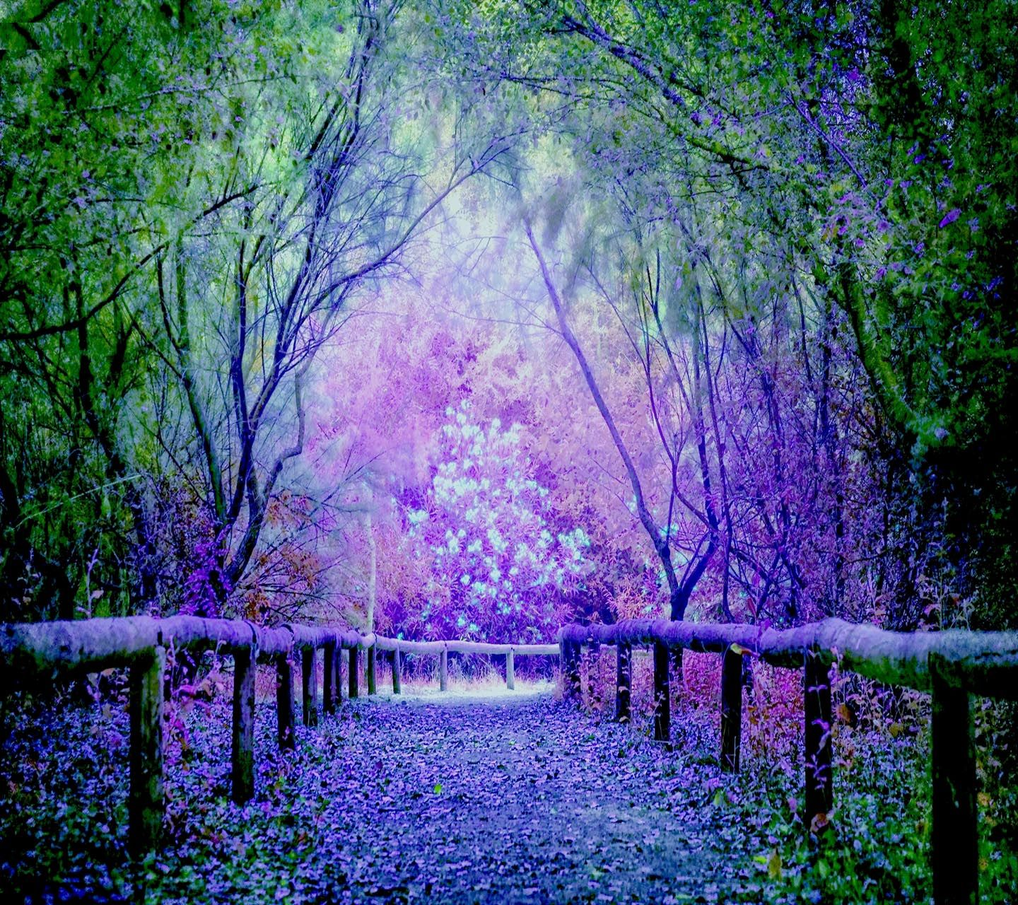 Beautiful Blue Green And Purple Tree Pathway Wallpaper